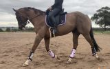 Eye catching and unspoilt on HorseYard.com.au (thumbnail)