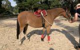 Eye catching pony on HorseYard.com.au (thumbnail)