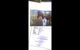 ASH Gelding on HorseYard.com.au (thumbnail)