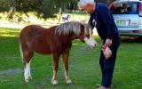 Outstanding Welsh A Yearling Gelding on HorseYard.com.au (thumbnail)