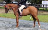 Heartbreaking Decision To Sell This Lovely Pony  on HorseYard.com.au (thumbnail)