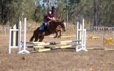 Competitive childs mount- Jump, event, dressage, show on HorseYard.com.au (thumbnail)