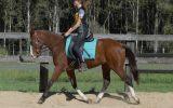 Rising 4yo ASH x QH - Kobe on HorseYard.com.au (thumbnail)