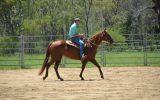 Quarter Horse Mare - Phoenix on HorseYard.com.au (thumbnail)