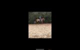 Lovely ISH Allrounder For Sale  on HorseYard.com.au (thumbnail)