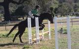 SUPER TRAINABLE OTT on HorseYard.com.au (thumbnail)