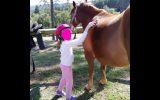 This Quarter Horse is Stella!! on HorseYard.com.au (thumbnail)