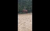 Dream alrounder on HorseYard.com.au (thumbnail)