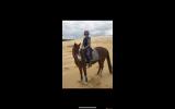 Stunning Chestnut  Mare on HorseYard.com.au (thumbnail)