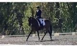 Perfection ! on HorseYard.com.au (thumbnail)