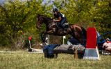 Perfect Gentleman on HorseYard.com.au (thumbnail)