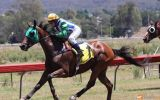 Tuskegee Commander (Commander)  on HorseYard.com.au (thumbnail)