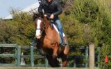 Bold, brave QH x Clydie Eventer. Sold on HorseYard.com.au (thumbnail)