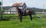 Trail riding  on HorseYard.com.au (thumbnail)