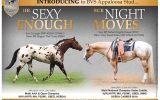 Appaloosa 2020 Foal Crop  on HorseYard.com.au (thumbnail)