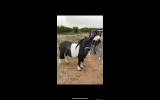 Leo on HorseYard.com.au (thumbnail)