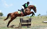 Perfect teenagers project eventer  on HorseYard.com.au (thumbnail)
