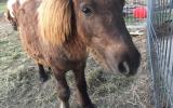 Taffy colt on HorseYard.com.au (thumbnail)