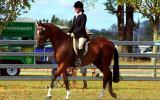 'Stratums Express' Royal Show Quality Hack on HorseYard.com.au (thumbnail)