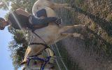 Flashy Palomino Appaloosa gelding on HorseYard.com.au (thumbnail)