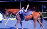 SUPER QUIET RED QH GELDING +VIDEO+ on HorseYard.com.au (thumbnail)