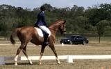El Sasso (Sassy) on HorseYard.com.au (thumbnail)