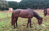 OTT horse for sale on HorseYard.com.au (thumbnail)