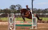 PRICE REDUCED: Everything and more!  on HorseYard.com.au (thumbnail)