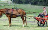 Red Sulky Plus Full Set English Harness on HorseYard.com.au (thumbnail)
