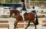 Euston Victorious  on HorseYard.com.au (thumbnail)