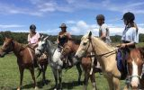 My lovely palomino  on HorseYard.com.au (thumbnail)