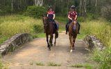 Quiet OTT Gelding on HorseYard.com.au (thumbnail)