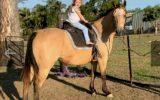 Buckskin QH mare on HorseYard.com.au (thumbnail)