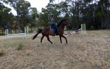 Gorgeous boy with all the hard work done!  on HorseYard.com.au (thumbnail)