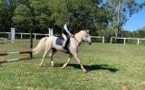 Pretty Welsh Pony on HorseYard.com.au (thumbnail)