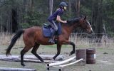 NZ Thoroughbred Bay Mare on HorseYard.com.au (thumbnail)
