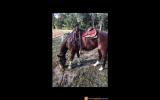 Teskey's Saddle  on HorseYard.com.au (thumbnail)