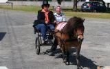 Mr Mack Miniature Pony - ridden or cart. on HorseYard.com.au (thumbnail)