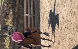 Great Trail Riding Horse on HorseYard.com.au (thumbnail)