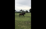 Looking for a forever home  on HorseYard.com.au (thumbnail)