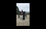 Free Lease Talented Mare  on HorseYard.com.au (thumbnail)