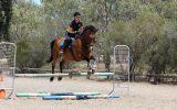 Shory Park Smack That - 16.2hh 12yo Unraced TB Gelding on HorseYard.com.au (thumbnail)