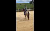 Pepper- Appaloosa teen's mount on HorseYard.com.au (thumbnail)