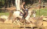 Arabian Riding Pony 7yo - 14.3hh Excalibur Park Roxtar on HorseYard.com.au (thumbnail)