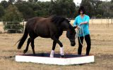 14yo QH Mare  on HorseYard.com.au (thumbnail)