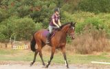 Outstanding unraced 3yr filly on HorseYard.com.au (thumbnail)