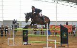 Perfect Schoolmaster Showjumper on HorseYard.com.au (thumbnail)