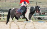 Gizmo - Riding School Reduction on HorseYard.com.au (thumbnail)