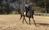 Handsome TB Gelding on HorseYard.com.au (thumbnail)