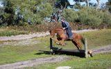 Stunning Chestnut Gelding on HorseYard.com.au (thumbnail)